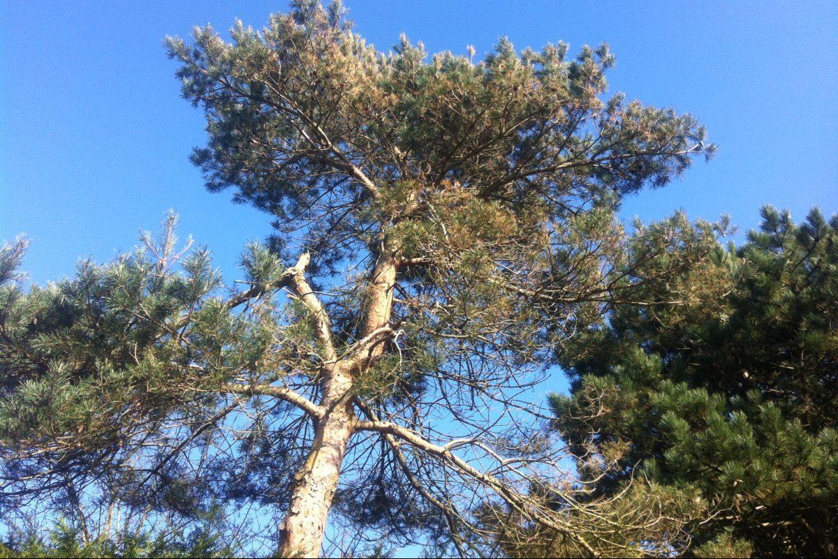 Bomen Op Erfgrens.Hinder Door Bomen Ruim Buiten De Erfgrens Recht Vastgoed Nl